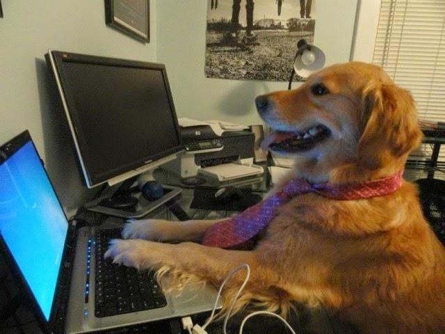 perro revisando su estado de facebook