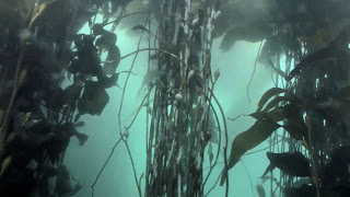 La Mer The Kelp Harvest