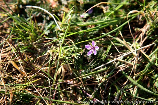 Patch of purple photograph