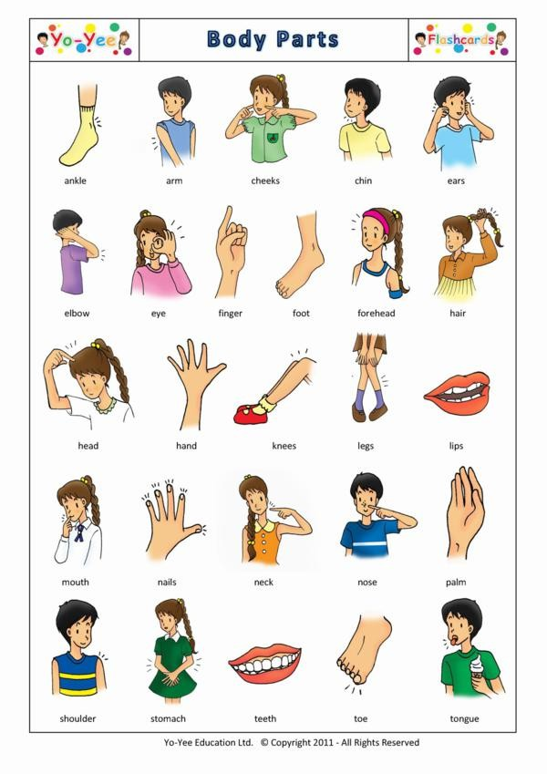 Please review body parts home we ve been practicing this in the