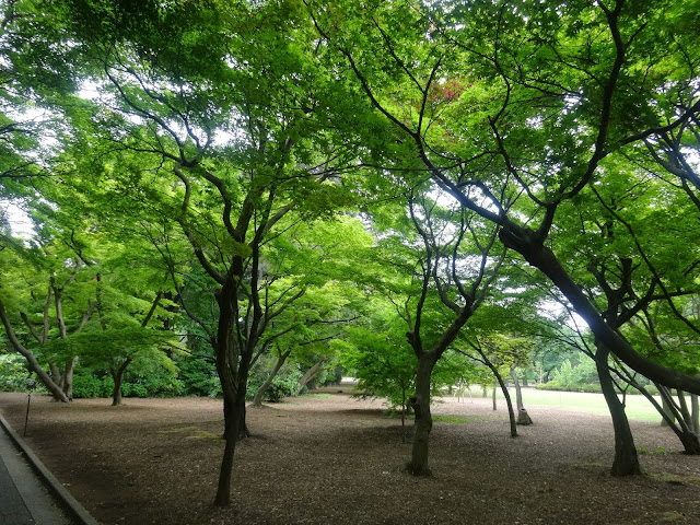 木立,林,新宿御苑〈著作権フリー無料画像〉Free Stock Photos