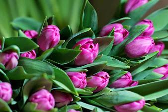#10 Delightful Flowers Art