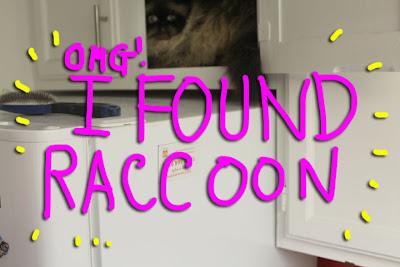 goma-raccoon 01