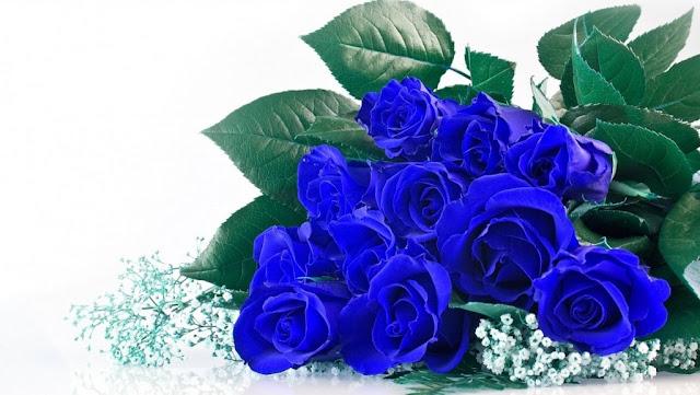 Bộ sưu tập ảnh hoa hồng xanh đẹp nhất