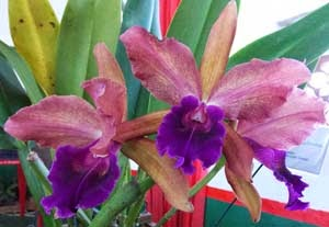 Não perca de vista as orquídeas.