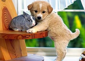 Imagenes Graciosas de Animales, Perro