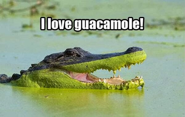 30 Funny animal captions - part 21 (30 pics), captioned animal pictures, crocodile i love guacamole