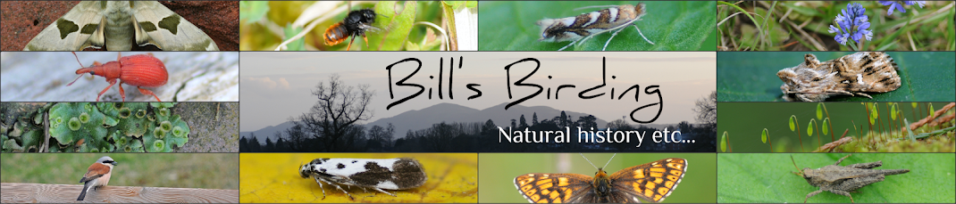 Bill's Birding