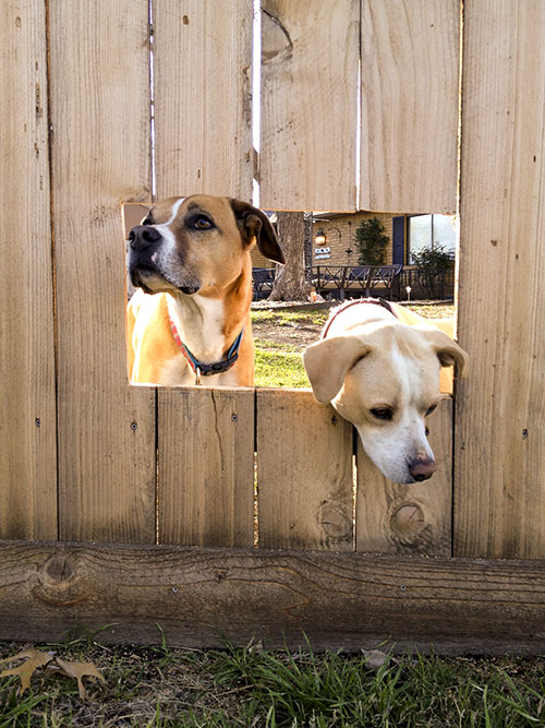 diy fence windows for dogs tutorial