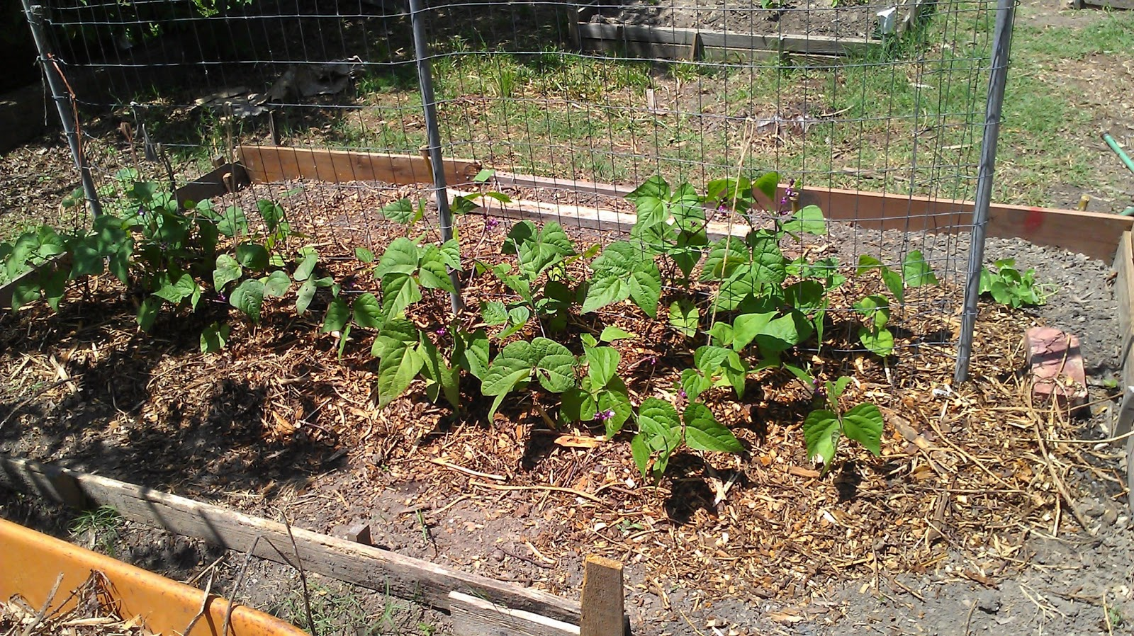 Where to buy wood chips for landscaping landscape ideas for Wood chip mulch vegetable garden