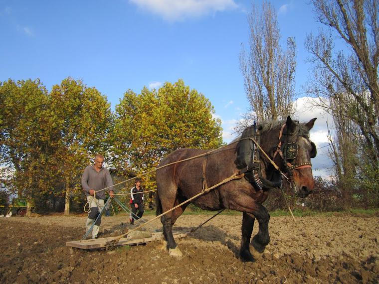 Rasclar. Festa de la sembra del blat a Malla 2011