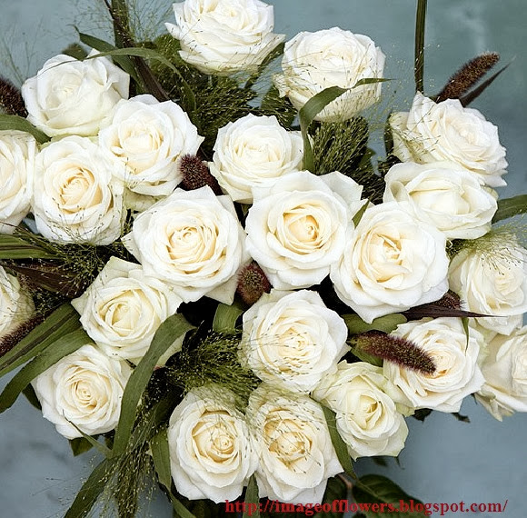 Image Of Flowers Pictures Roses Picture Photos White Rose