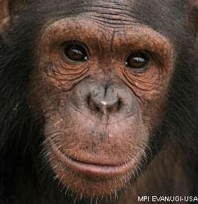 A semelhança entre o homem e o macaco, o que isso mostra?