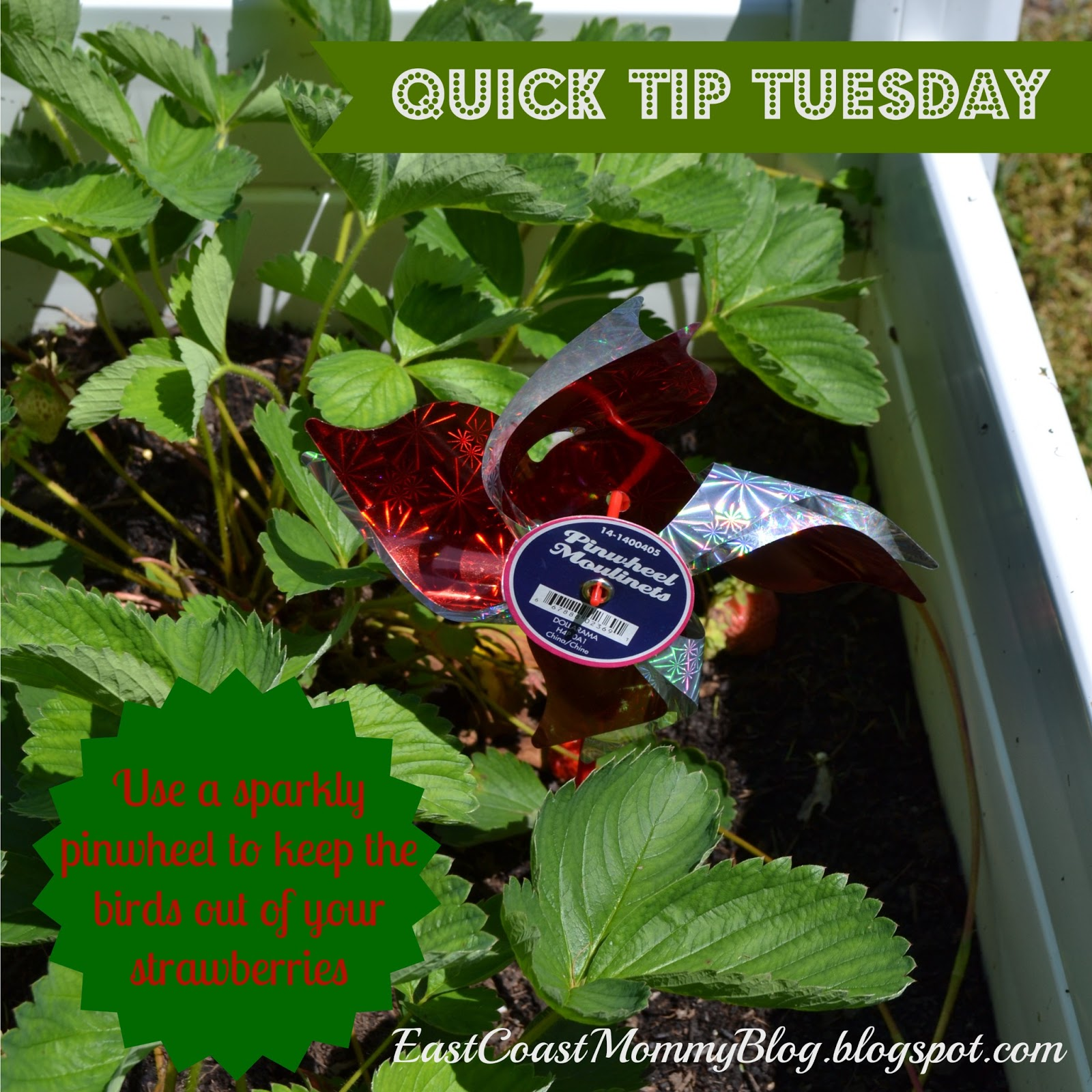 East Coast Mommy Quick Tip Tuesday 7 Pinwheels In The