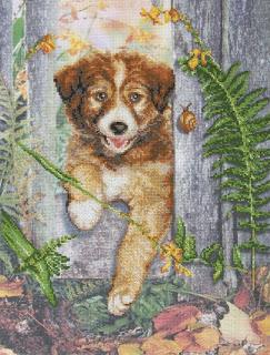 RTO, Любопытный щенок