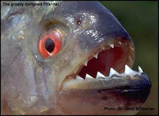 firanha ikan mematikan