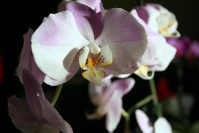 Focus on life: The beauty of flowers: The large pink orchid :: All Pretty Things