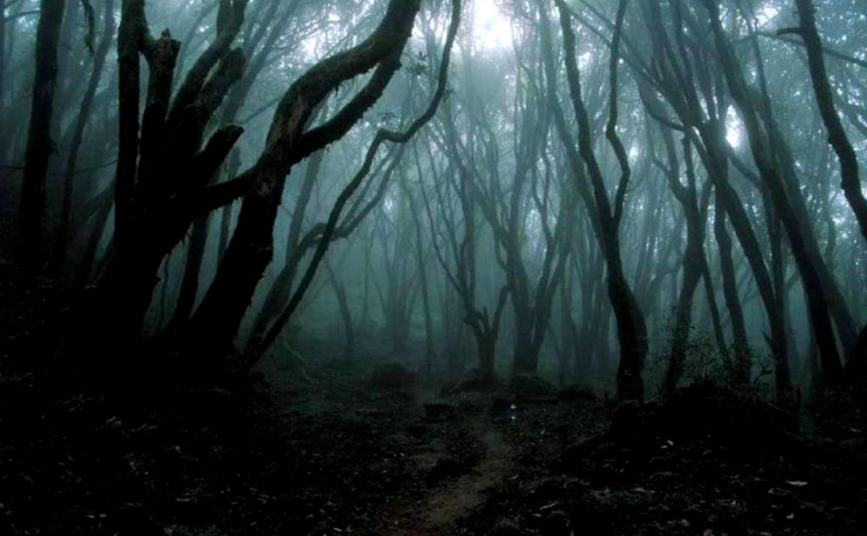 dark forest wallpaper 10
