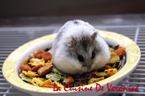 La Cuisine De Veronica 倉鼠 Hamster