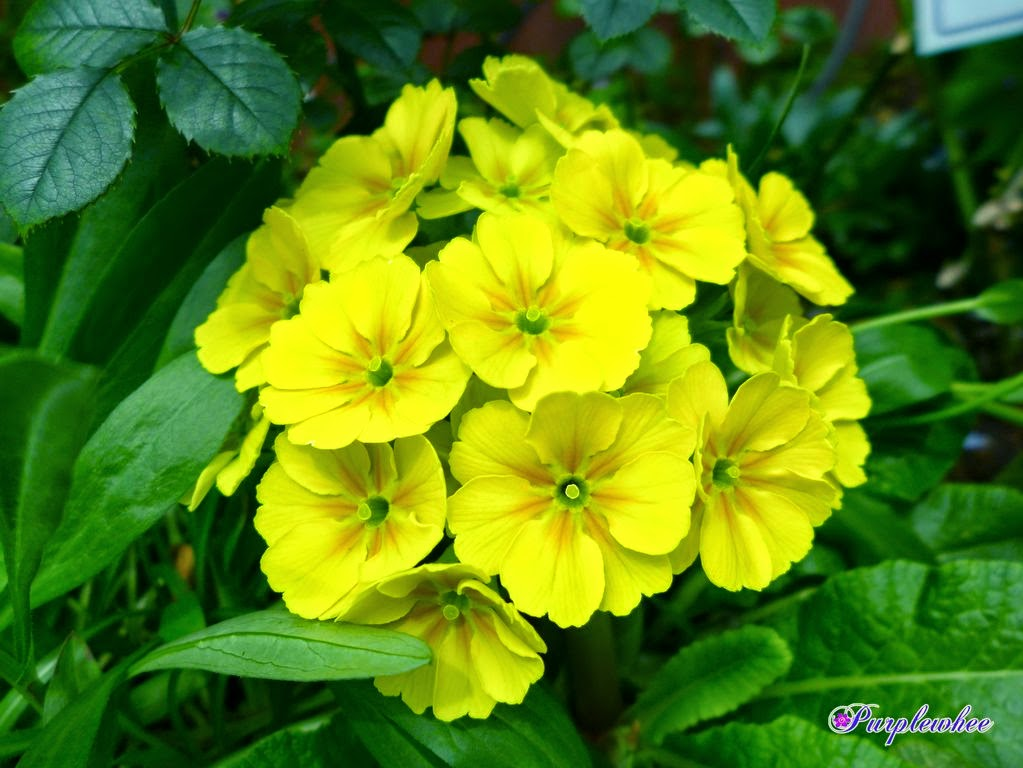 春花の画像 p1_12