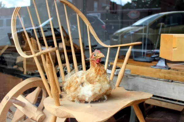 Just a Chicken Chillin' on a Chair #vintage #chicken