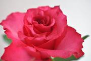 Mousse de chocolate negro com pimenta rosa, flor de sal e azeite do chef . (dsc )