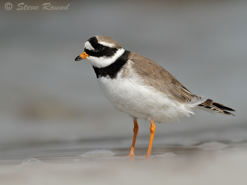 nature, bird, wildlife