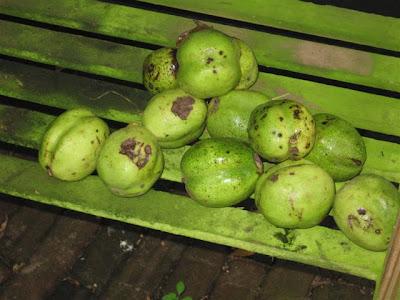 Wat te doen tegen mollen in het gazon