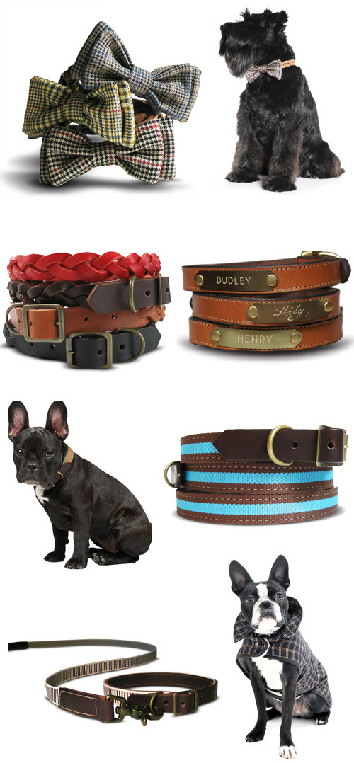 best in park, dog collars, dog accessories