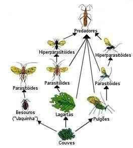 Controle Biológico