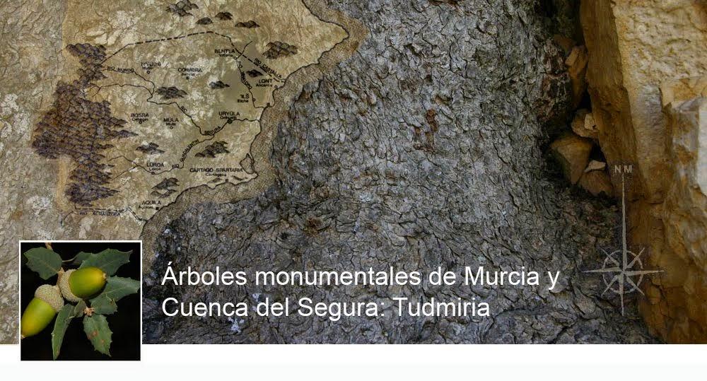 Árboles Monumentales de Murcia y Cuenca del Segura: Tudmiria