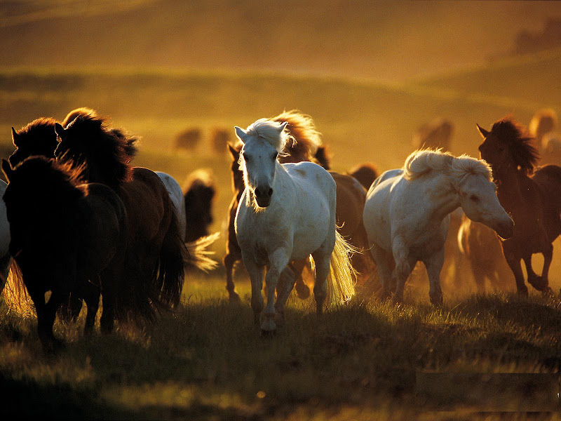 Beautiful Horse Pictures Desktop Background Beautiful Horse Desktop