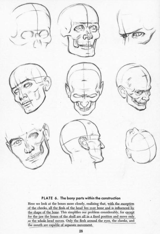 andrew loomis head
