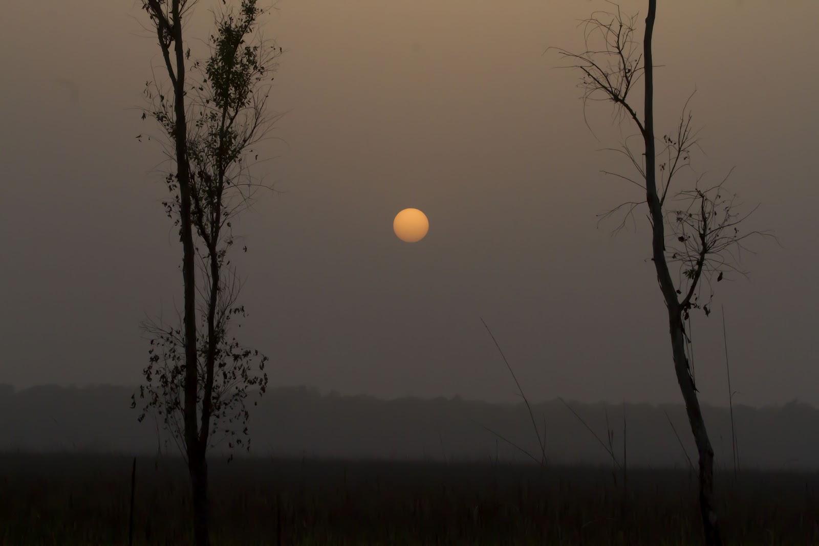Dudhwa+Landscape+2.JPG