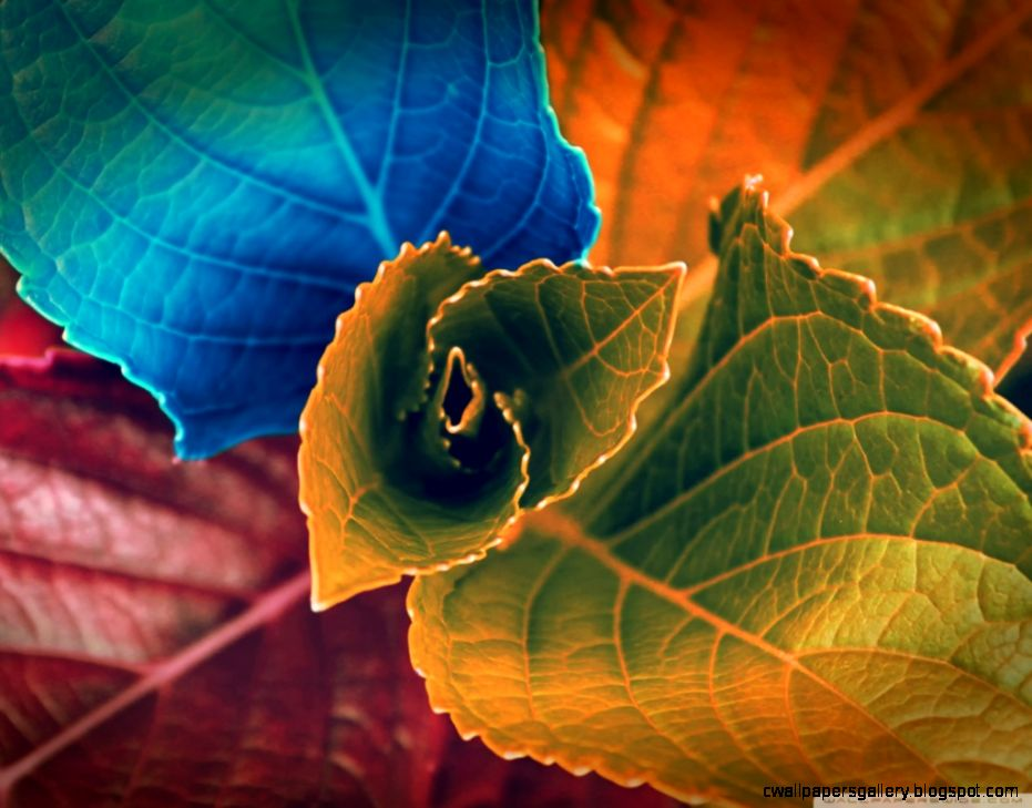 Colorful Plant HD desktop wallpaper  Widescreen  High Definition