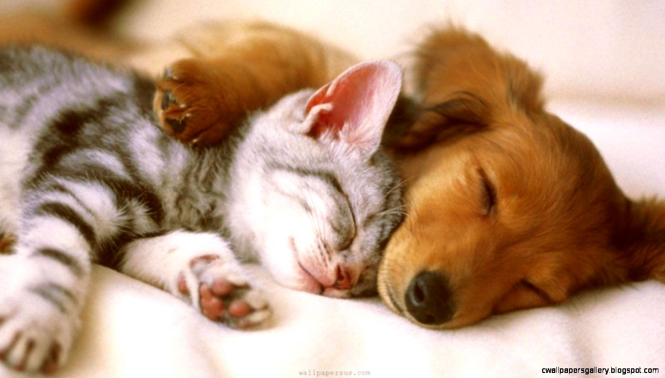 Cute Puppies and Kittens HD Wallpapers