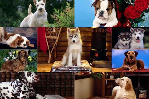 Imágenes y fotografías de perritos VI (9 wallpapers HD)