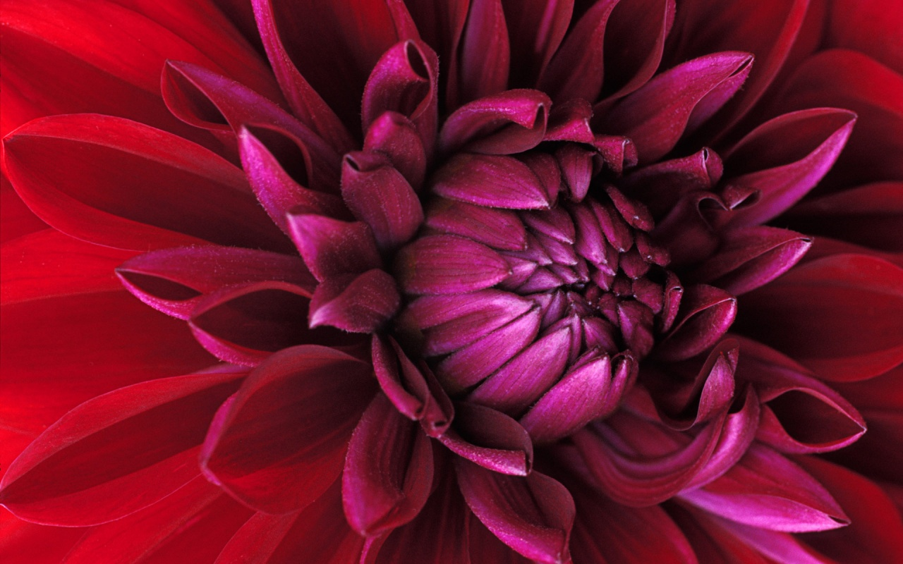 http://3.bp.blogspot.com/-lHZzzjQufok/Tzpgh8RYCcI/AAAAAAAABTo/6c6StbA4hTQ/s1600/windows_7_flower-1280x800.jpg