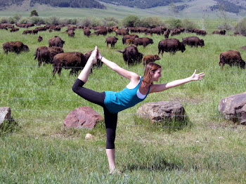 Buffalo Yogi