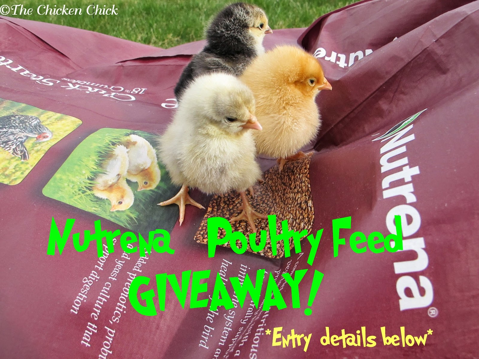 Nutrena Poultry Feed Giveaway at The Chicken Chick®