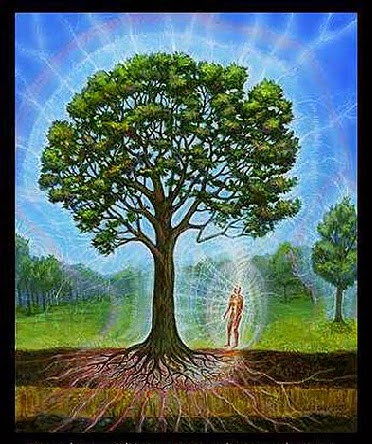 Image result for trees are conscious