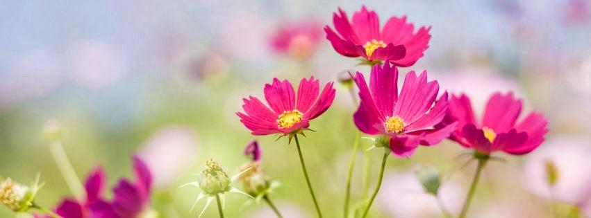 Qué estás pensando?: Portadas para Facebook de flores
