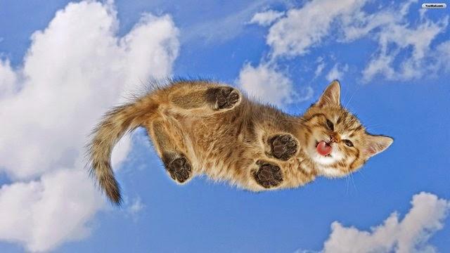 hình nền mèo con hài hước nhất