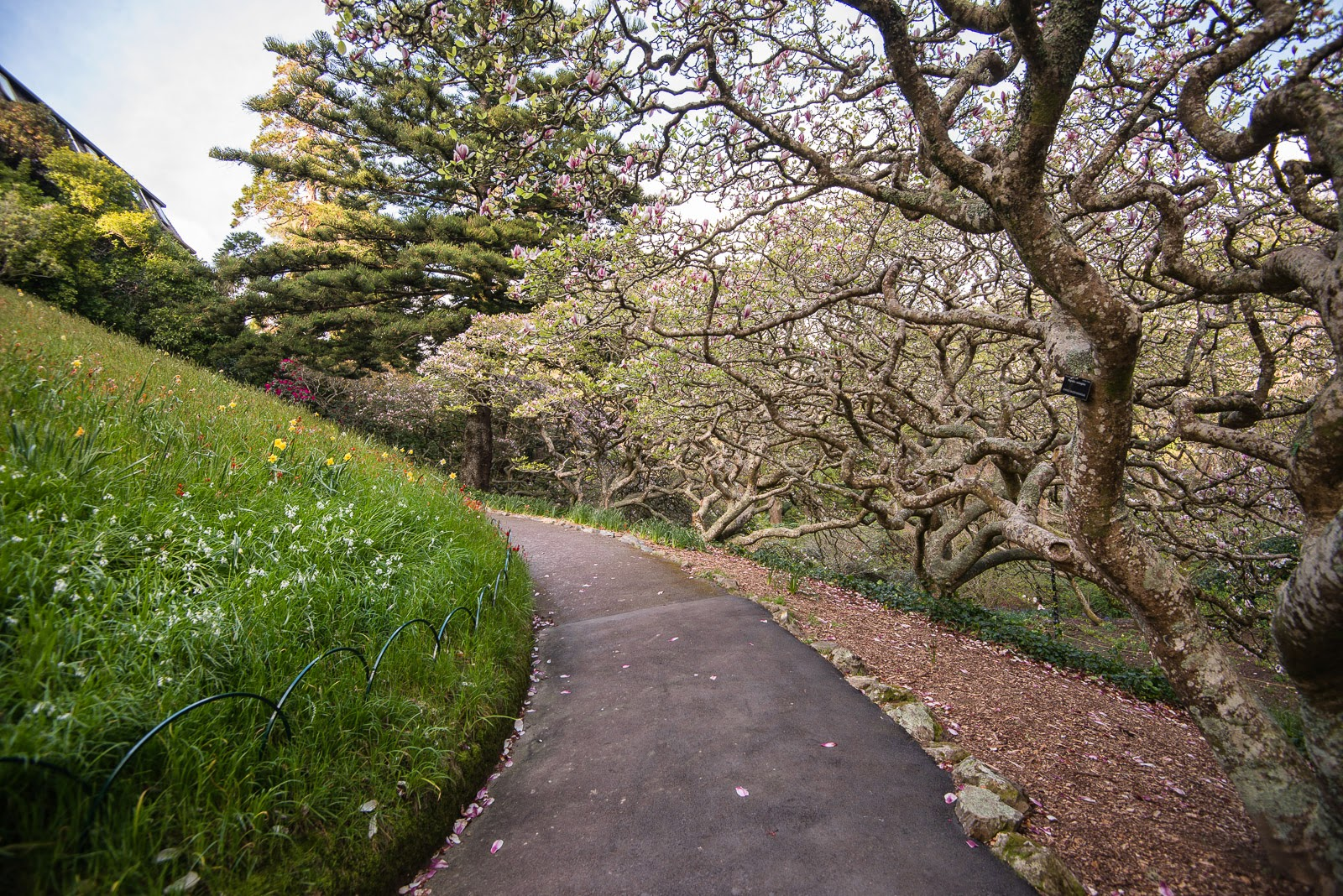 magnolia trees disappearing path wellington gardens