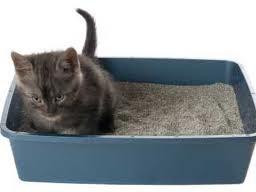 Areia sanitária ou sílica para gatos