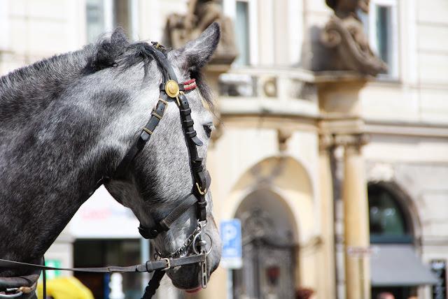 Balade a cheval dans Prague