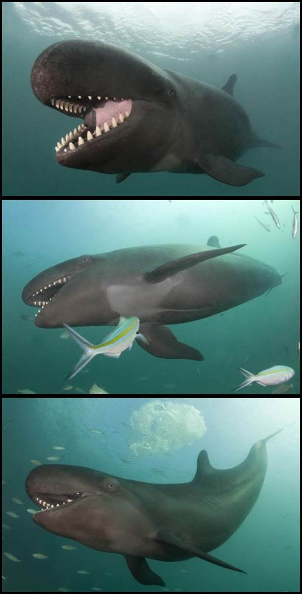 ikan paus suka senyum