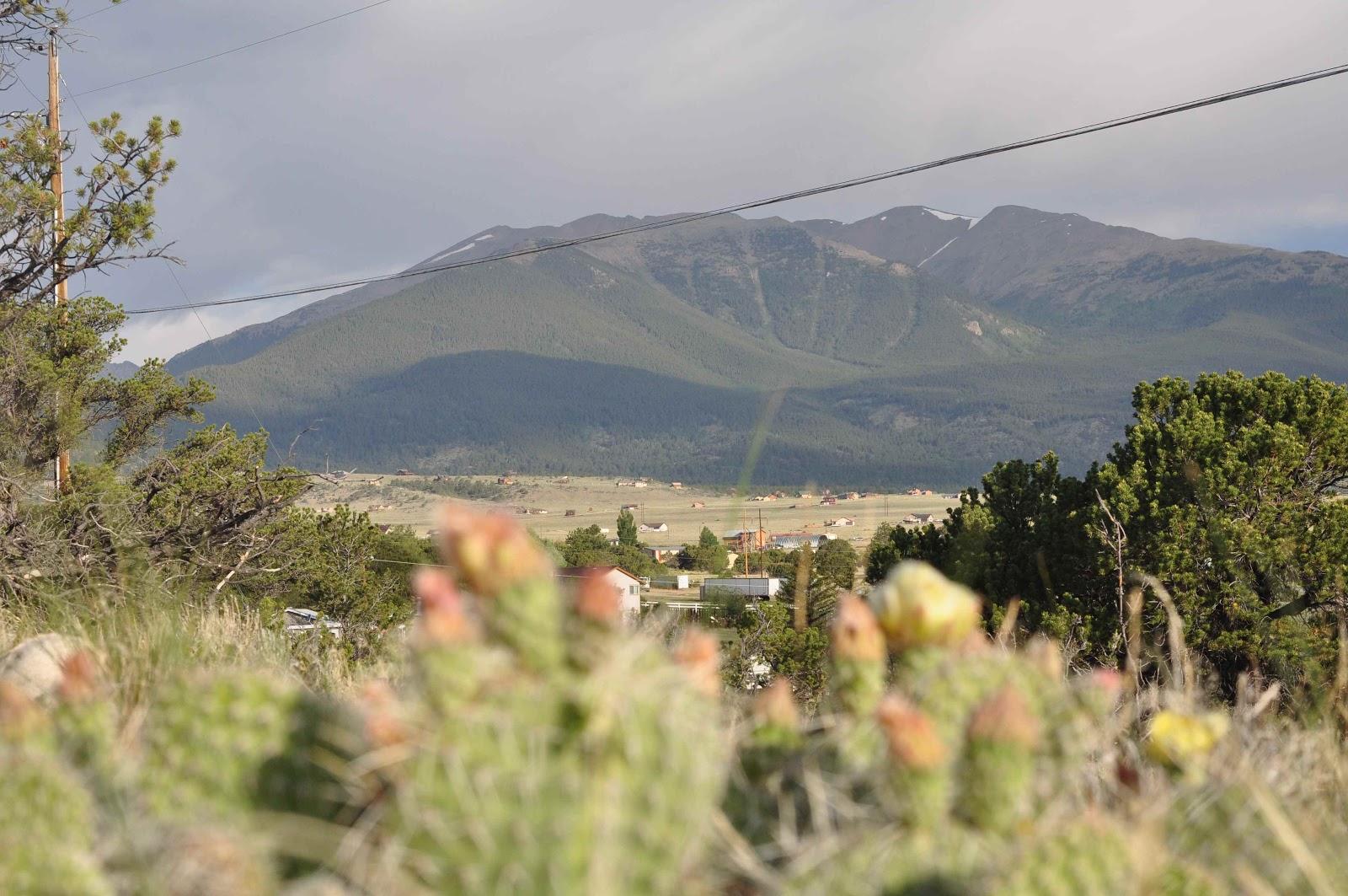 cactus Buena Vista coloradoviews.filminspector.com