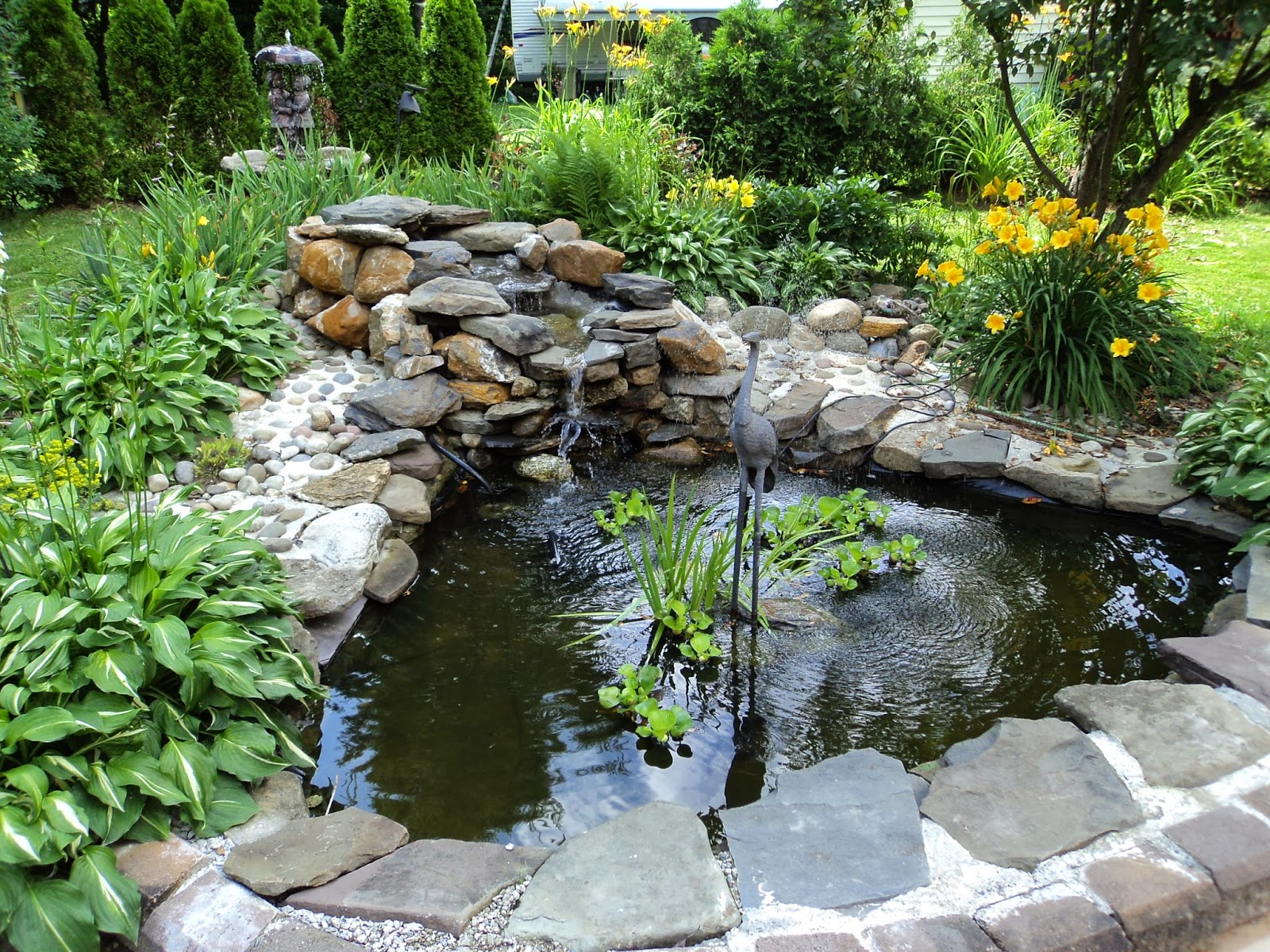 Redo it yourself inspirations backyard and pond project for Plants for fish pond surrounds
