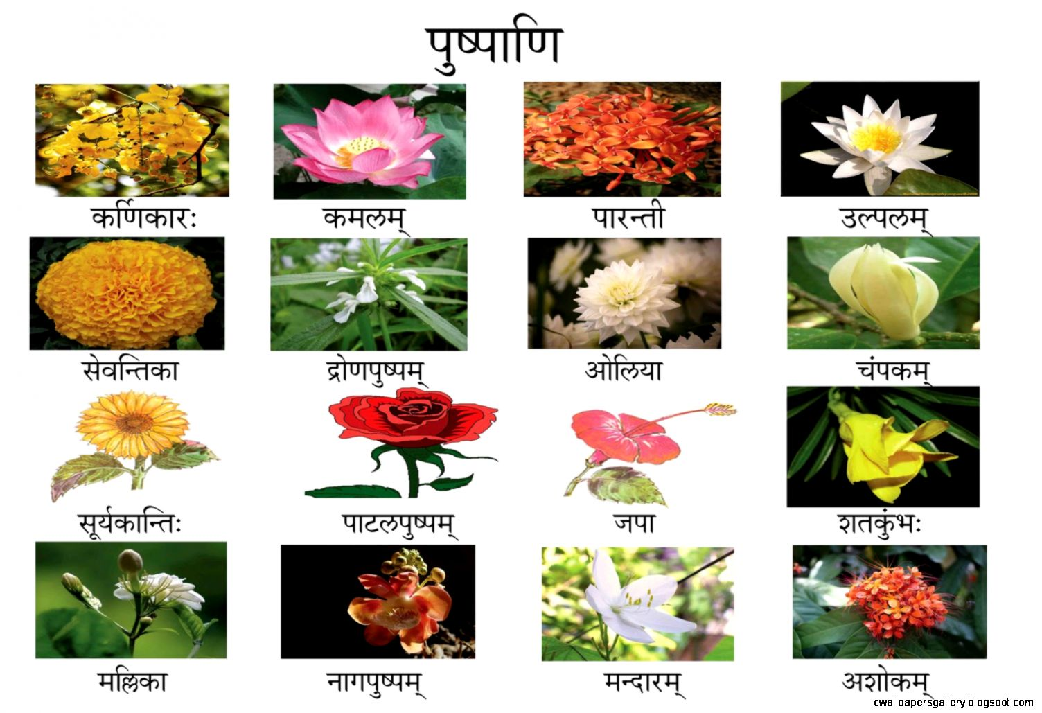 5 Flower Names In Sanskrit   Flowers Ideas